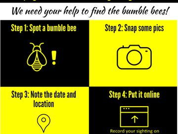 Snap a pick of a bee in Simcoe County for the Great Canadian Bumble Bee Count