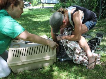 Feral cat colony in Meaford gets help