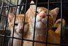 Very Merry Kitten Christmas Adoption Event