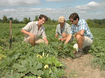 Campbellville growers embrace vegetable farming with total commitment