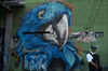 Blue Parrot club