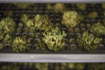100,000 pot orders in first 24 hours: Ontario government