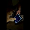 Funny pet video of the day: Jack the cat plays with an iPad