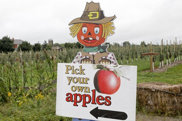 Where To Go Apple Picking In Toronto And The Gta Toronto Com
