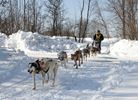 Mushers on the trail