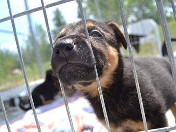 Collingwood shelter needs food donations for adorable puppies