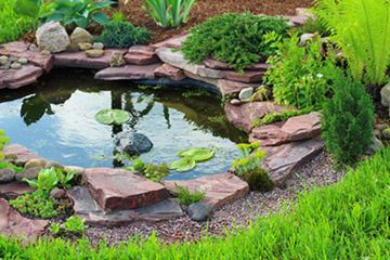 Pond supplies tropical pond plants and pond fish