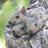 Three Little Squirrels