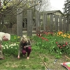 Your Life: Waking up the lawn to a new growing season