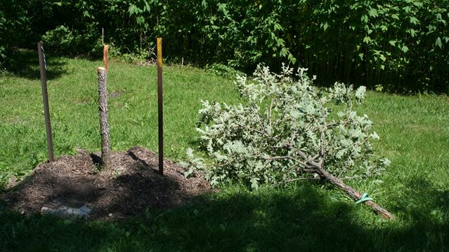 Memorial trees vandalized