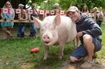 Esther the Wonder Pig could get own TV show