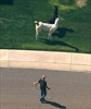 2 loose llamas lassoed after running amok near Phoenix-Image1