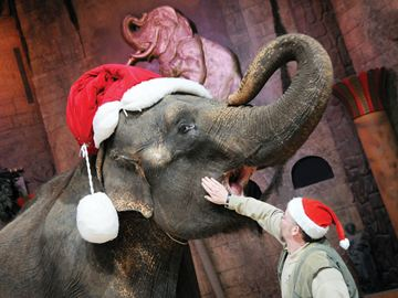 Robert Crawford, the elephant manager and trainer at the Bowmanville Zoo, posed for pictures with Limba the elephant in the Animatheatre at the zoo. Limba has been invited to participate in the Bowmanville Santa Claus Parade November 16.