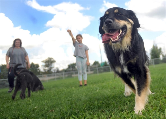Bechtel Dog Park Kitchener On