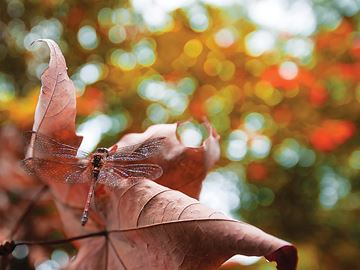 Victoria Harbour photographer captures autumn close-up