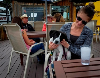Canadian dog owners envious of  NYC's pet-friendly patios-Image1