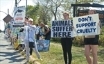 Marineland protest
