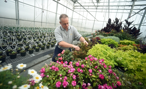 Kitchener Horticulturalists Working Hard To Make Spring