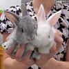 Rabbit residences