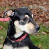 Pet of The Week: Benson