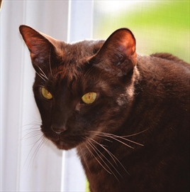 Family searches for missing Kemptville cat– Image 1