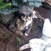 Feral cats in Whitby