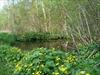 Roseville swamp