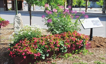 Carleton Place sister communities' tribute flower borders to be unveil– Image 1