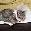 Cat weaering a cone