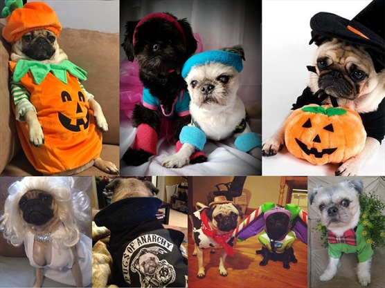 Pug-o-ween returns to St. Catharines Oct. 20