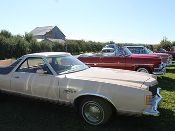Classic cars tour through Meaford