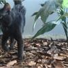 Adopt A Pet: Phil needs a home