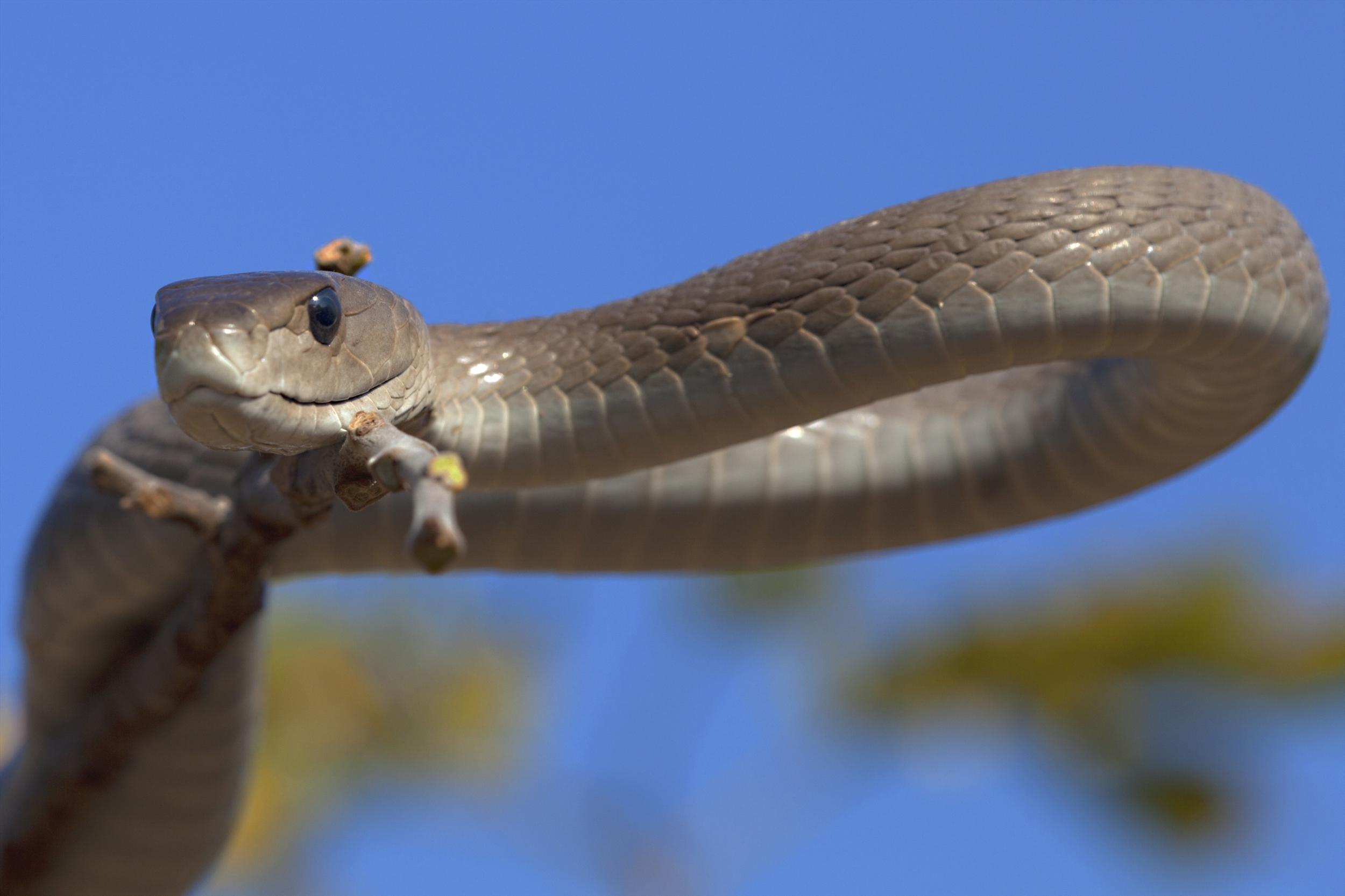 The longest, largest snakes – Top 10 | DinoAnimals.com