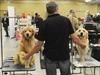 PHOTOS: Dog Show