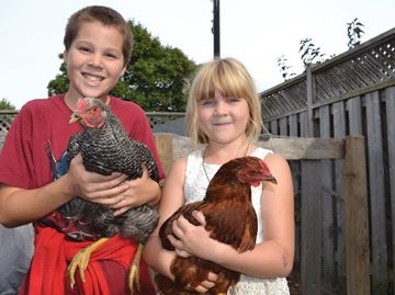 Collingwood family keeping banned backyard chickens pushes for changes to town bylaws