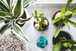 Choose houseplants that are beautiful and easy to care for.