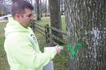 Bug causes tree removals in Oro-Medonte
