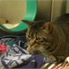 Adopt A Pet: Jack needs a home