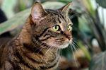 Pet of the Week: Louise