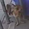 Dog theft suspect