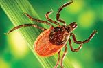 The trouble with ticks
