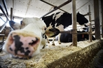 Baloney Meter: the outcry over spilled milk-Image1