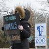Zoo Protest