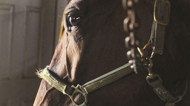 Horsemen urge province to re-integrate racing