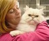 Cat Licencing