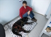 Pet owners big believers in animal acupuncture-Image1