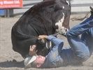 Roseneath Rodeo