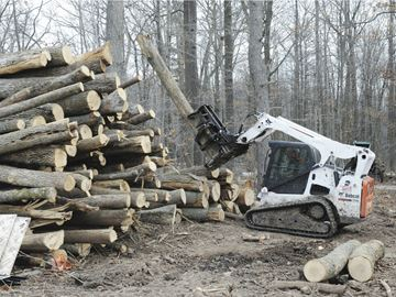 Town of Oakville removing ash trees from woodlands to eradicate Emerald Ash Borer (EAB)