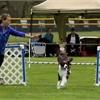 KW Kennel Club Annual Dog Show