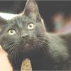 Adopt-A-Pet: Playful kitten needs a home